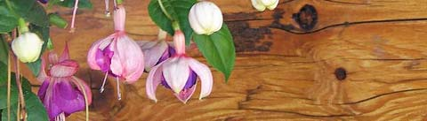 گلی چوبی