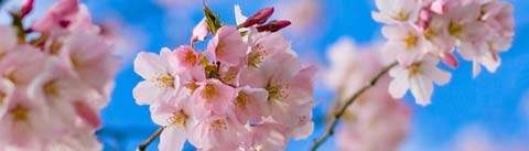 رایحههای گلها