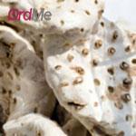 ریشه زنبق سفید